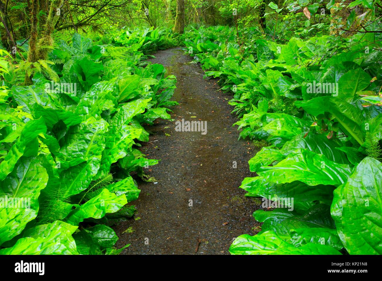 Spencer Creek Trail, Beverly Beach State Park, Oregon. - Stock Image