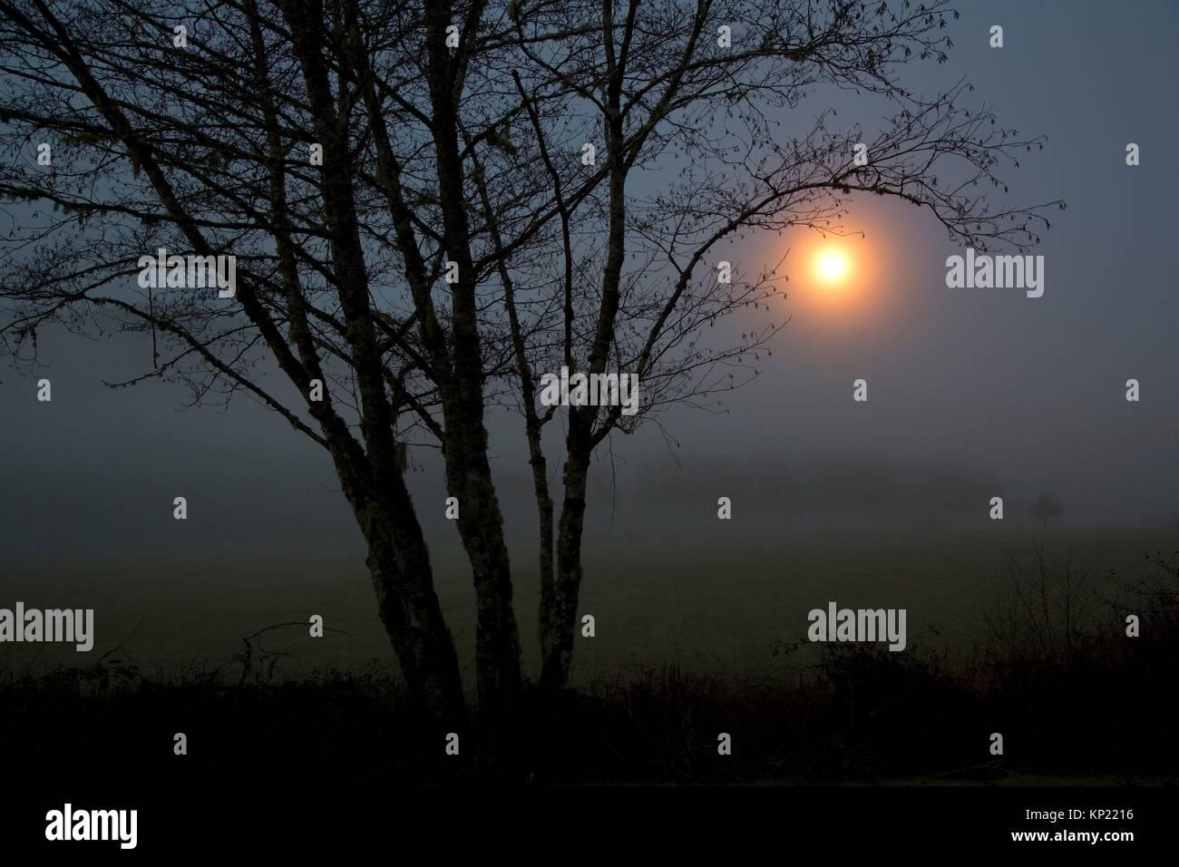 Moonrise with tree silhouette, Jewell Meadows Wildlife Area, Oregon. - Stock Image