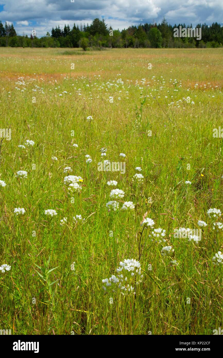 Roberts Meadow, Kingston Prairie Preserve, Marion County, Oregon. - Stock Image