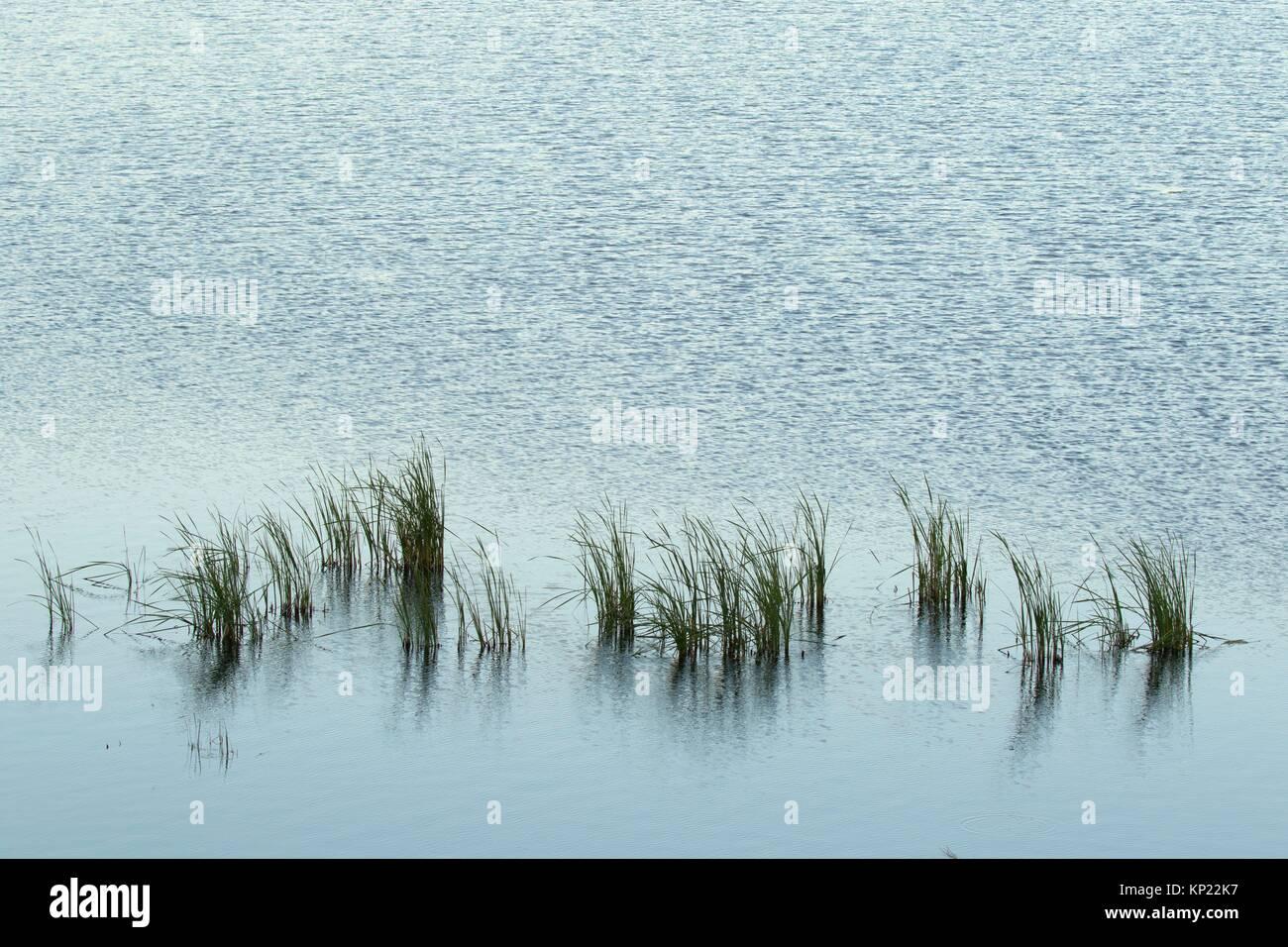 Restored wetland pond, Ball Creek Ranch Preserve, Idaho. - Stock Image