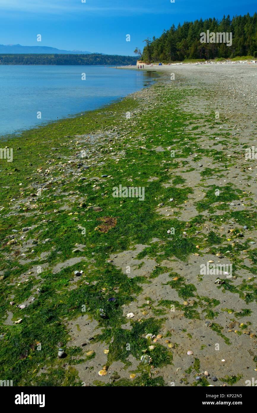 Beach, Foulweather Bluff Preserve, Washington. - Stock Image