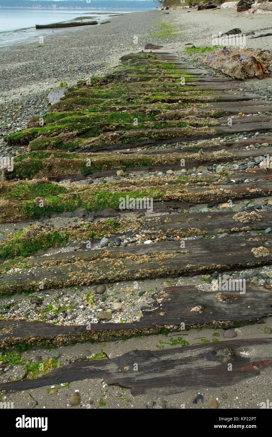 Plank beach road remnant, Fort Townsend Historical State Park , Washington. - Stock Image