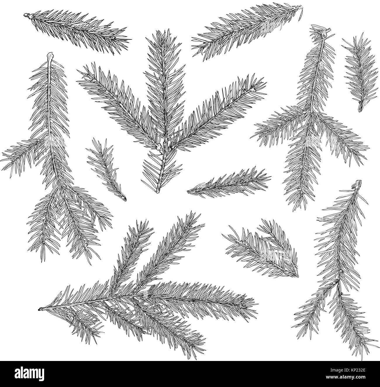 Set Of Fir Tree Branches Isolated On White Background