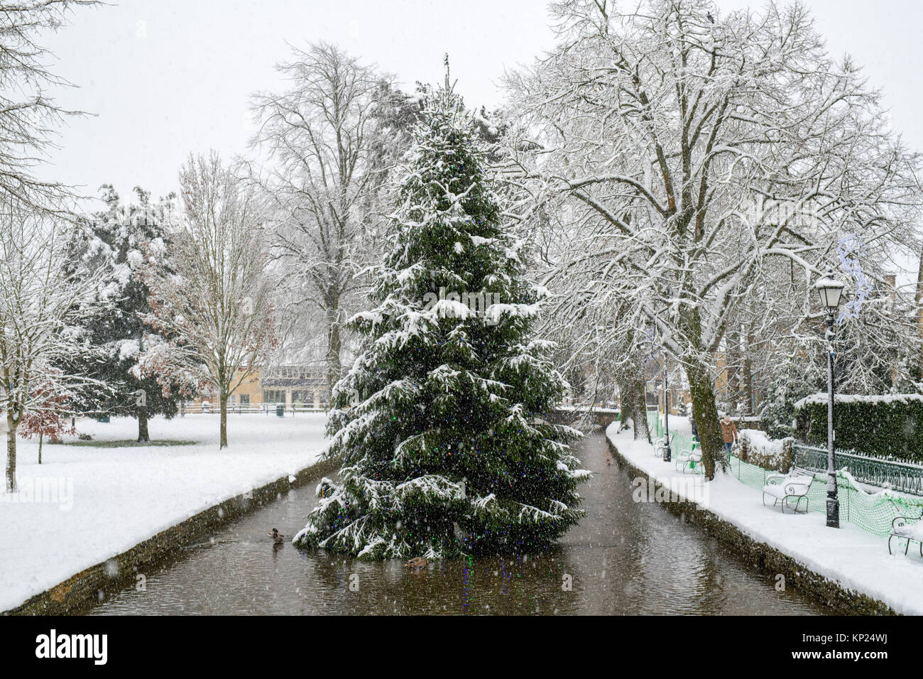 England Christmas Snow.Falling Snow Covering The Christmas Tree In Bourton On The