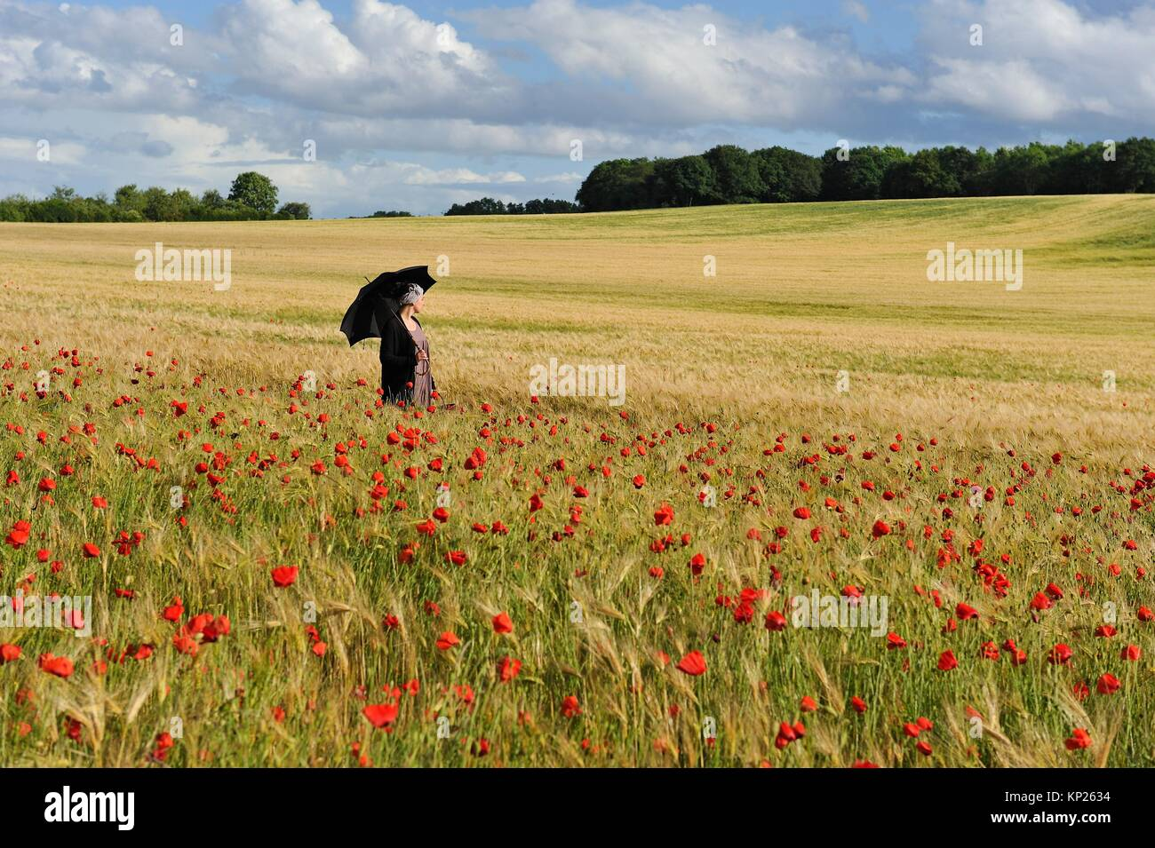 young woman with sunshade in a cereal field dotted with poppies, France, Europe. - Stock Image