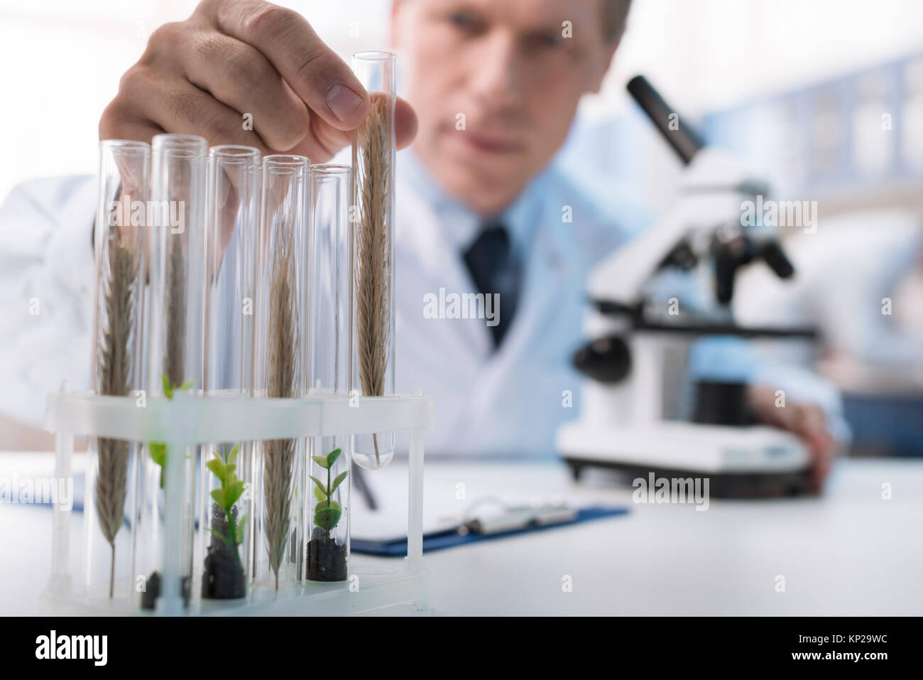 chemist working with test tubes - Stock Image