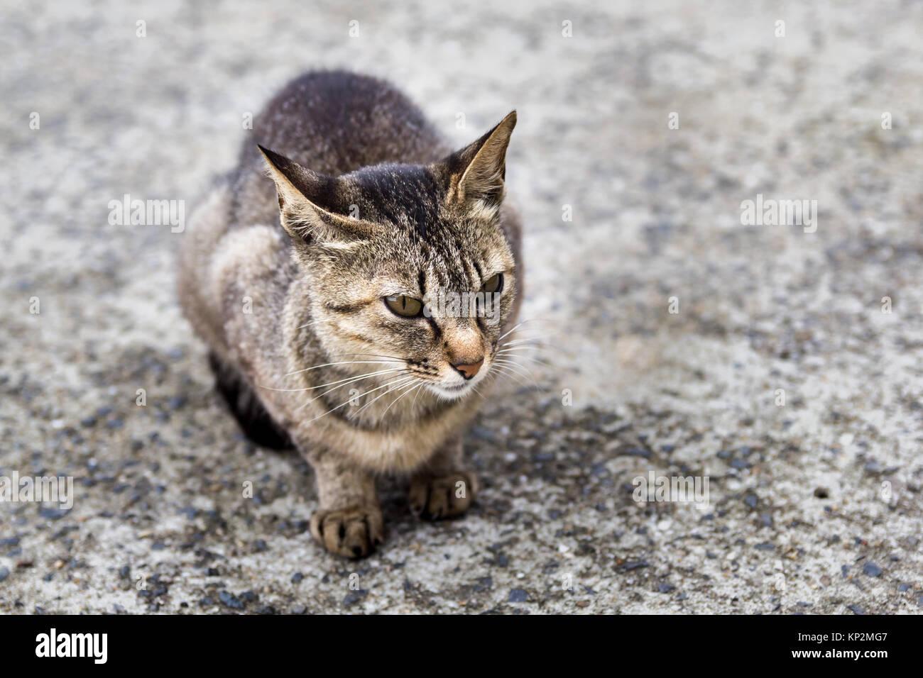 Cat on Manabeshima Island, Seto Inland Sea, Japan - Stock Image