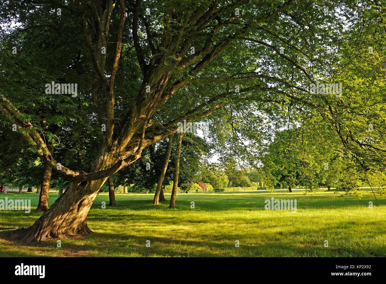 park of the Chateau de Rambouillet, Department of Yvelines, Ile-de-France region, France, Europe. - Stock Image