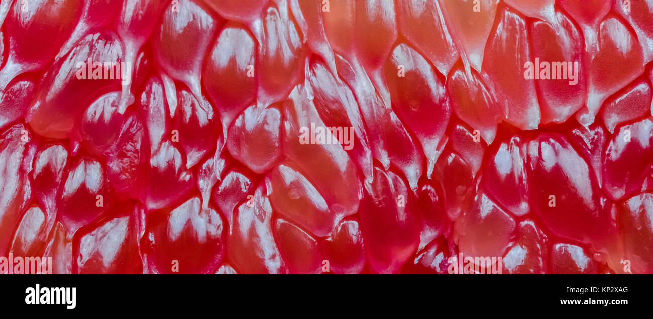Macro shot of red pomelo pulp texture background. Thailand Siam ruby pomelo fruit. Natural source of vitamin C (antioxidants) - Stock Image