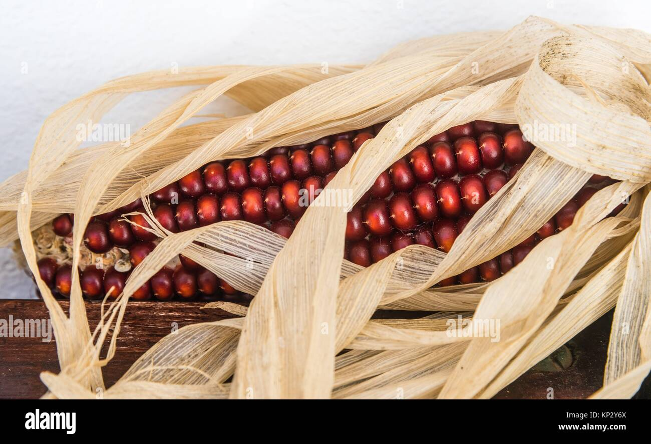 Corncobs. Natural Park Aracena and Picos de Aroche. Huelva. Andalusia. Spain. - Stock Image
