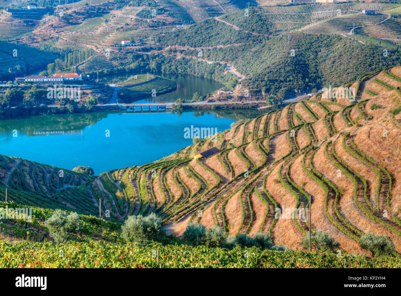 Vineyards and the Douro River, Alto Douro Wine Valley, UNESCO World Hertiage Region, Portugal - Stock Image