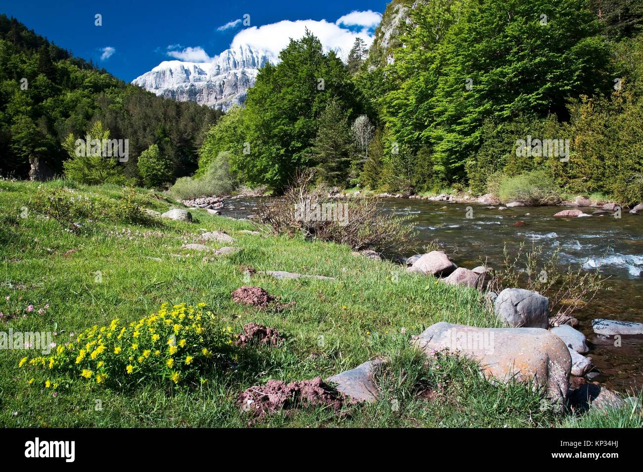 Selva De Oza And Aragon Subordan River Valle De Hecho Aragonese Stock Photo Alamy