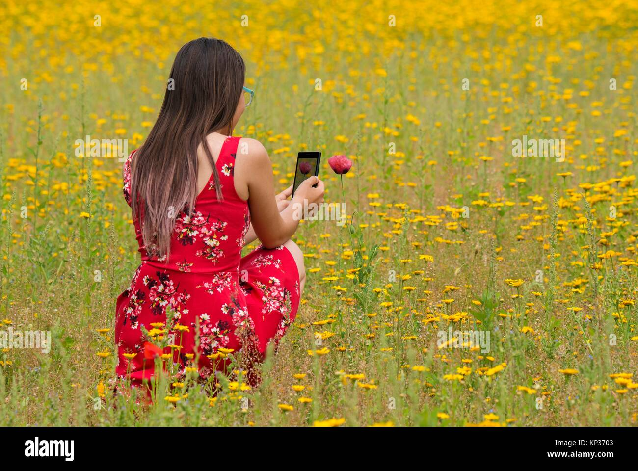 Girl with a red dress taking a photograph to a flower with a mobile in a yellow field. Stock Photo