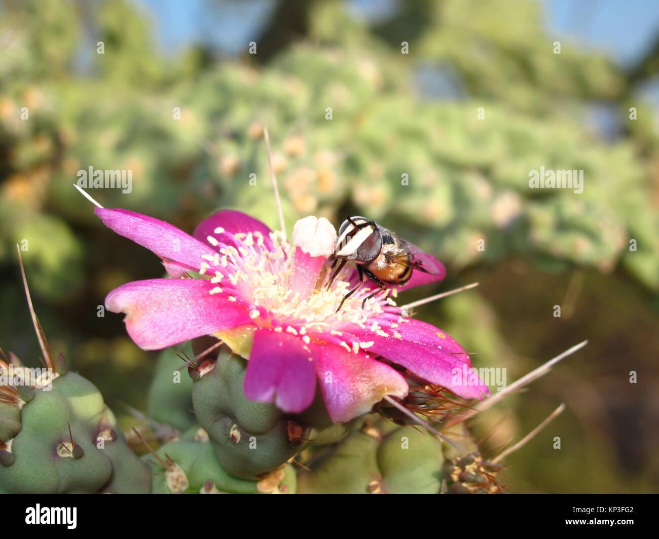 Zoom in bee - Stock Image