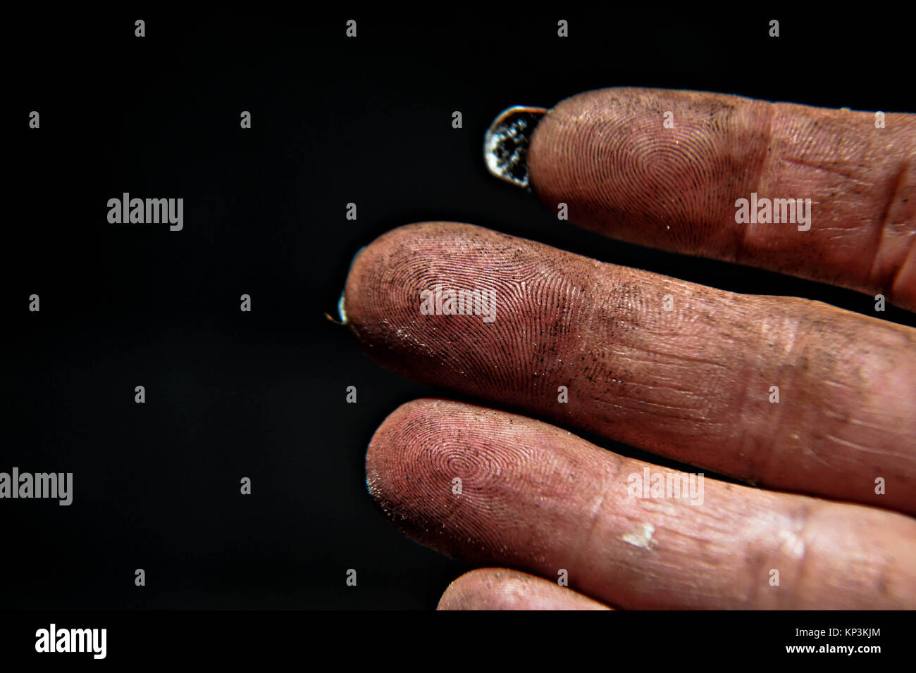 The forest soil on the hand with humus and nutrient for the plant - Stock Image