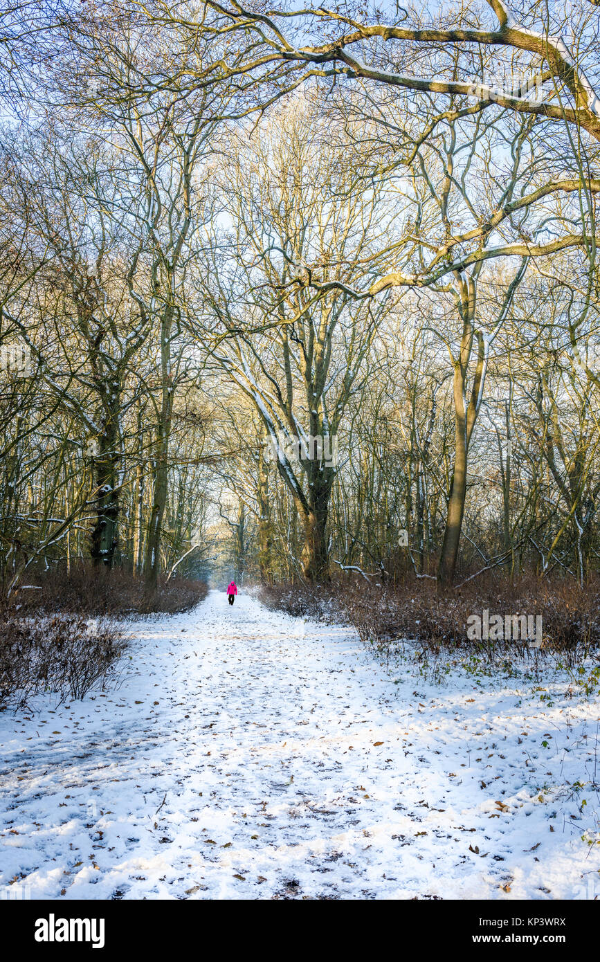 Corby, UK. 12th Dec, 2017. Man walks along a snow covered path through the Kingswood at Corby, England, on a cold, Stock Photo