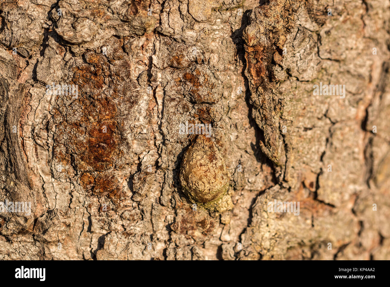 Brown tree trunk of old trees in the forest Stock Photo