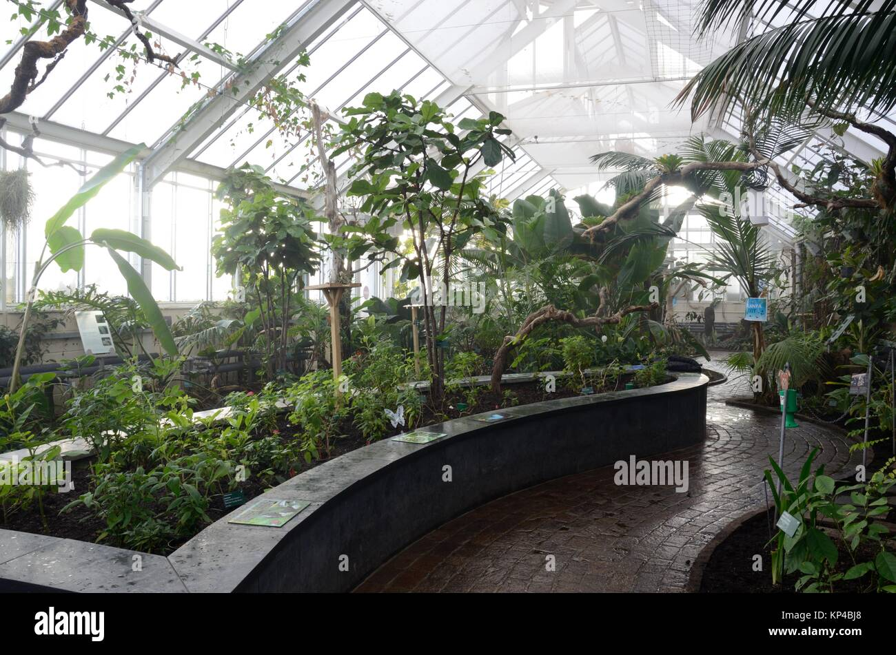 Humid interior of the butterfly house at The national Botanic Garden of Wales Llanarthney Carmarthenshire Wales - Stock Image