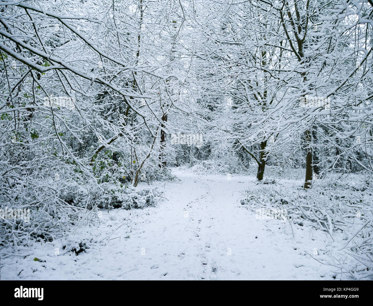 Footprints in the snow on a path through the forest. A winter wonderland scene. - Stock Image