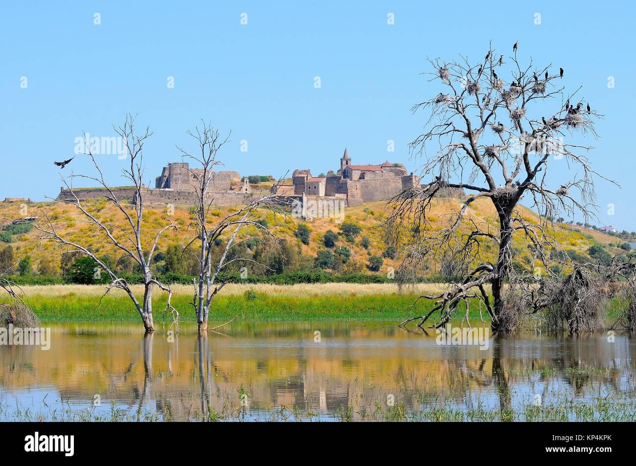 Fort of Juromenha and breeding colony of cormorants.Guadiana river.Alentejo.Portugal - Stock Image