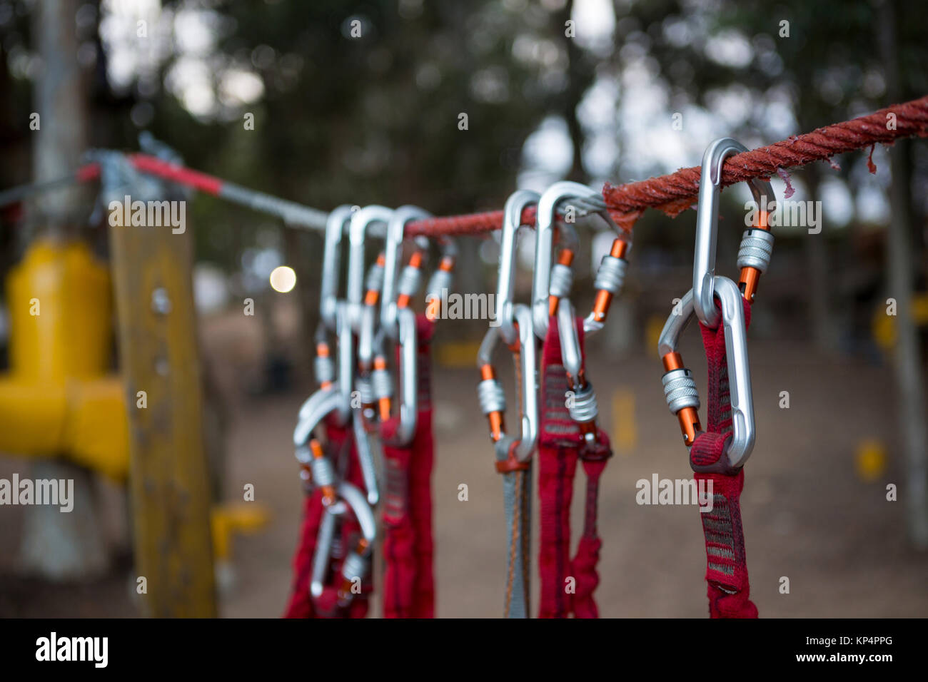 Close-up of harnesses hanging on rope in the forest Stock Photo