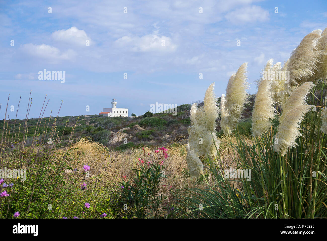 Pampas grass (Cortaderia selloana) and lighthouse, Capo Ferro, Costa Smeralda, Sardinia, Italy, Mediterranean sea, Stock Photo