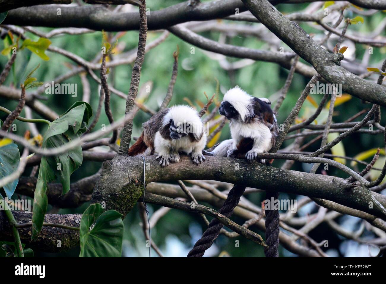 at the zoo in Cali, Colombia, South America. - Stock Image