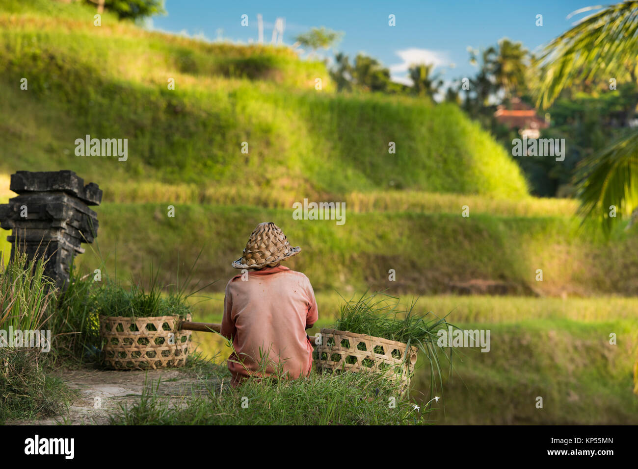 Tegallalang rice Terraces, Ubud, Bali, Indonesia - Stock Image