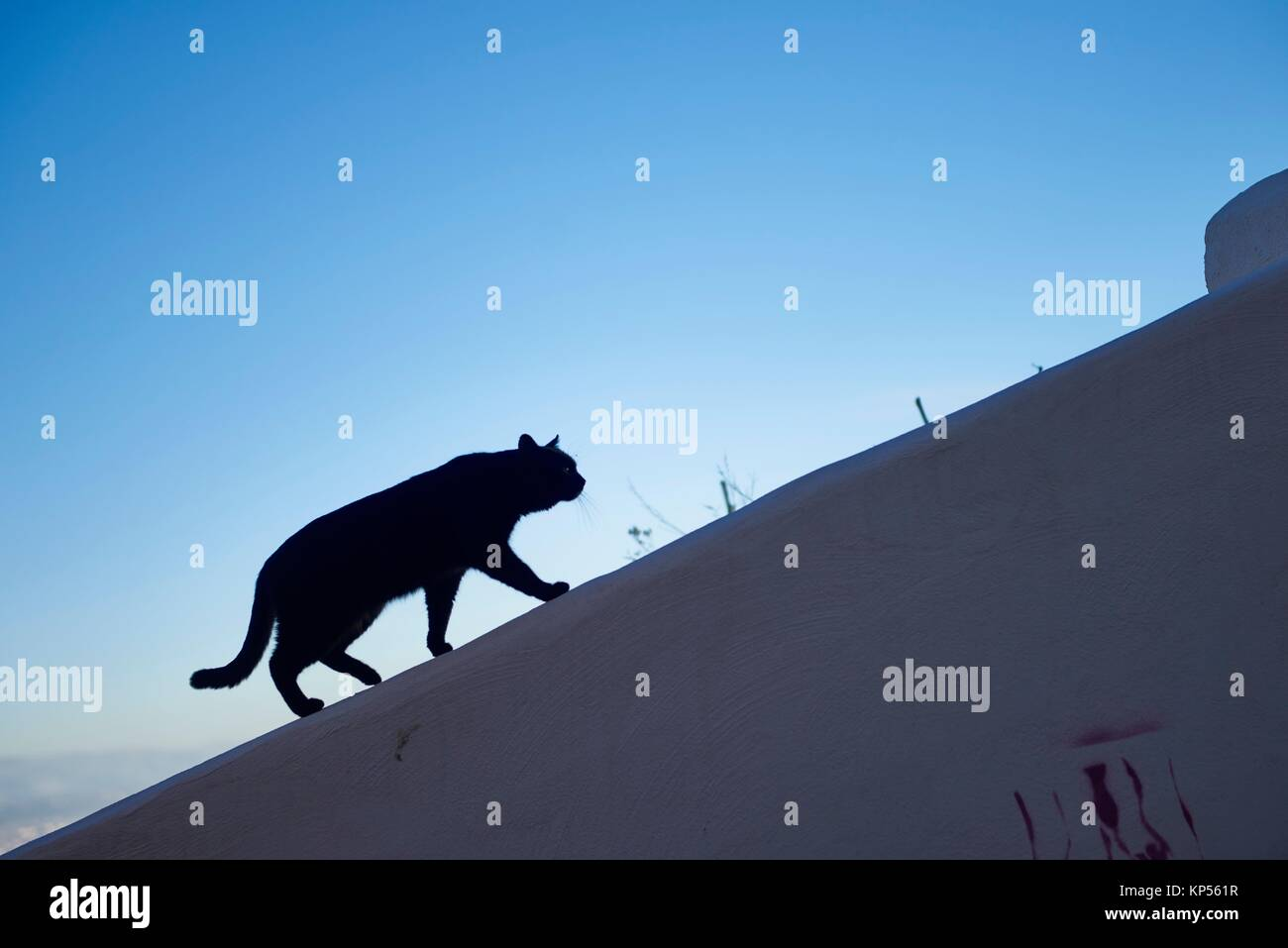 Black Cat, Granada, Andalusia, Spain, Europe. - Stock Image