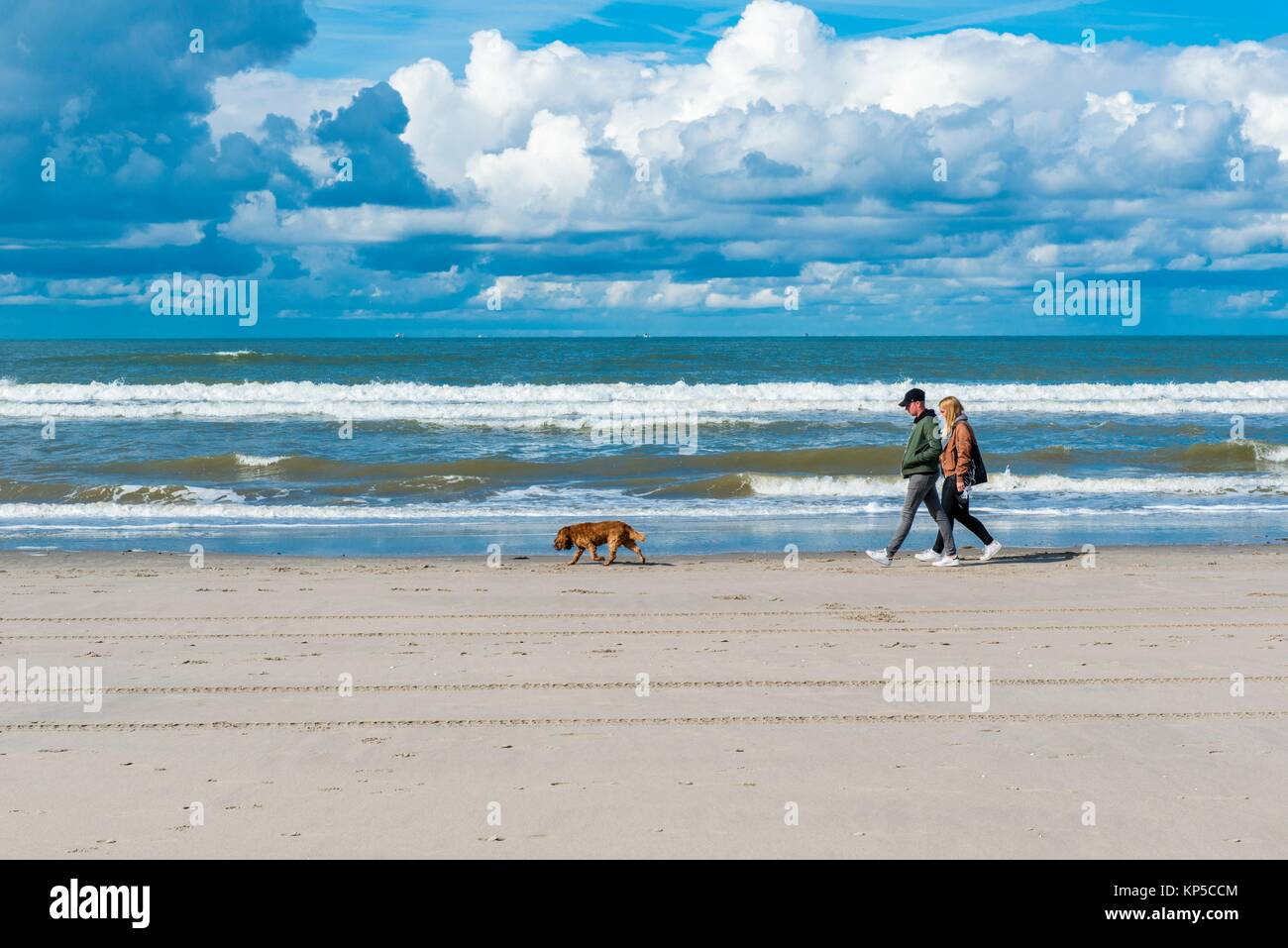 Hook of Holland, Netherlands. Couple walking the beach shore-line with their cocker spaniel pet dog. - Stock Image