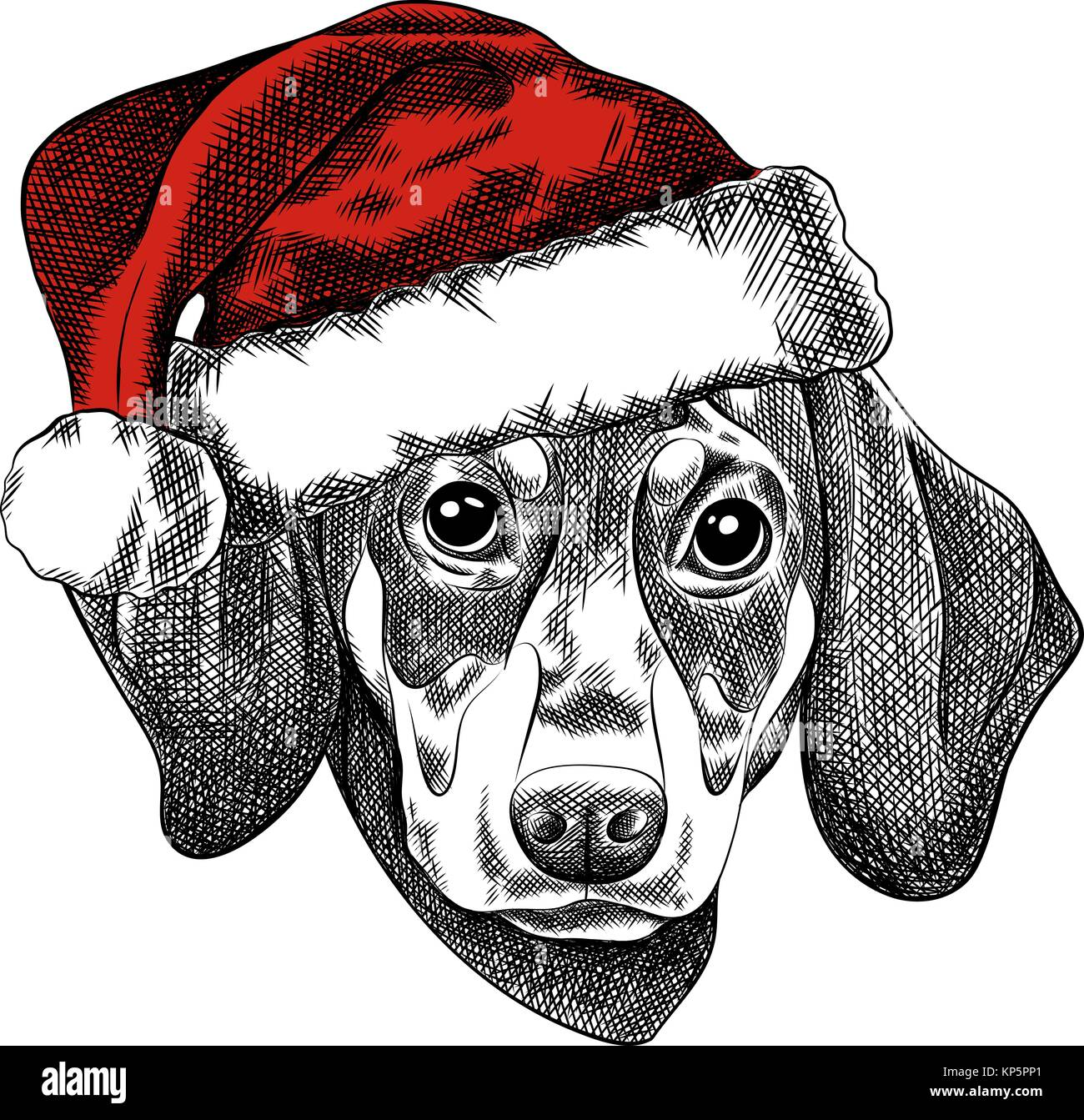 Vector illustration of a Dachshund dog for a Christmas card. Dachshund in the red cap of Santa Claus. - Stock Image