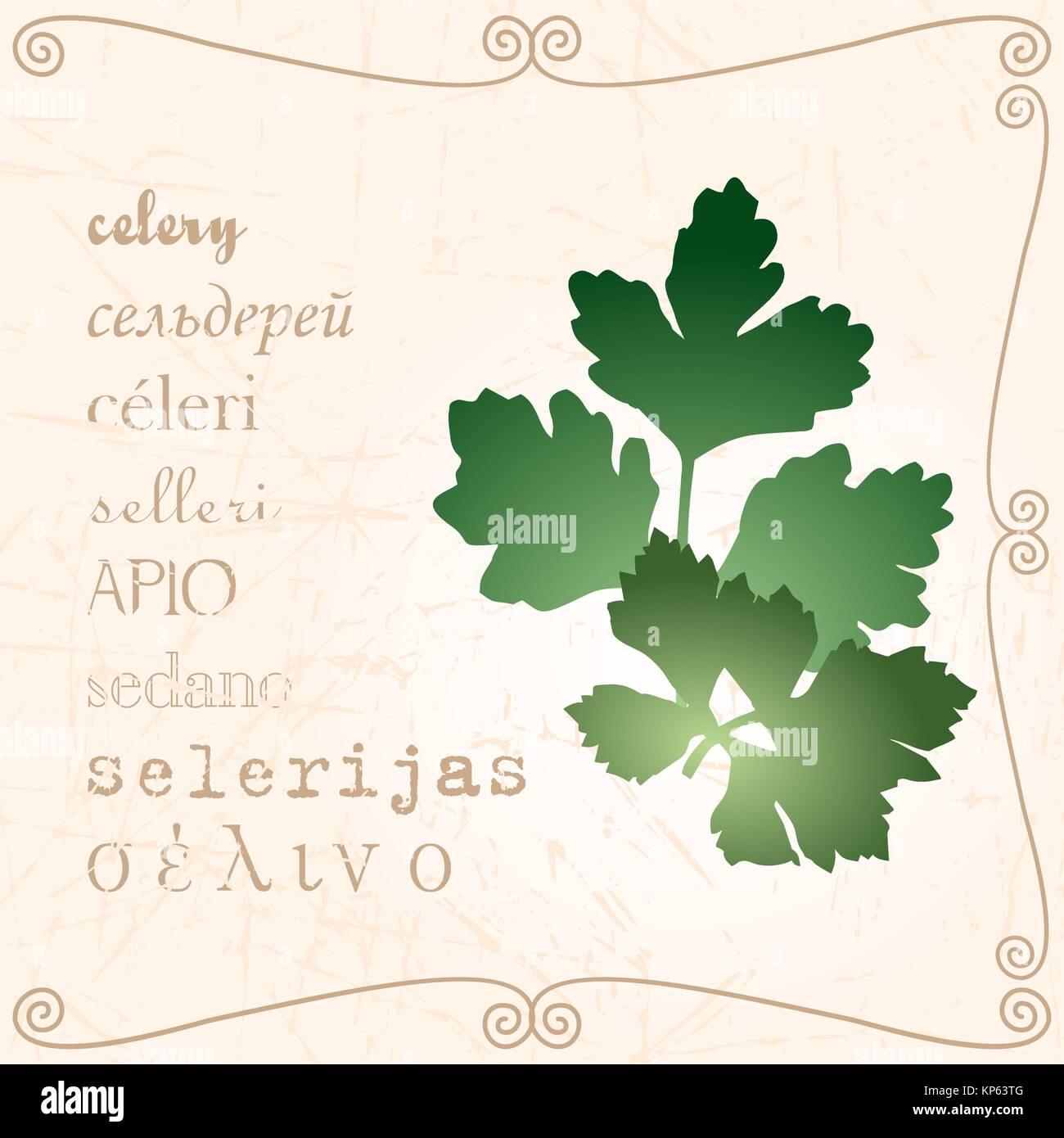 Sprig of celery in vintage style - Stock Vector