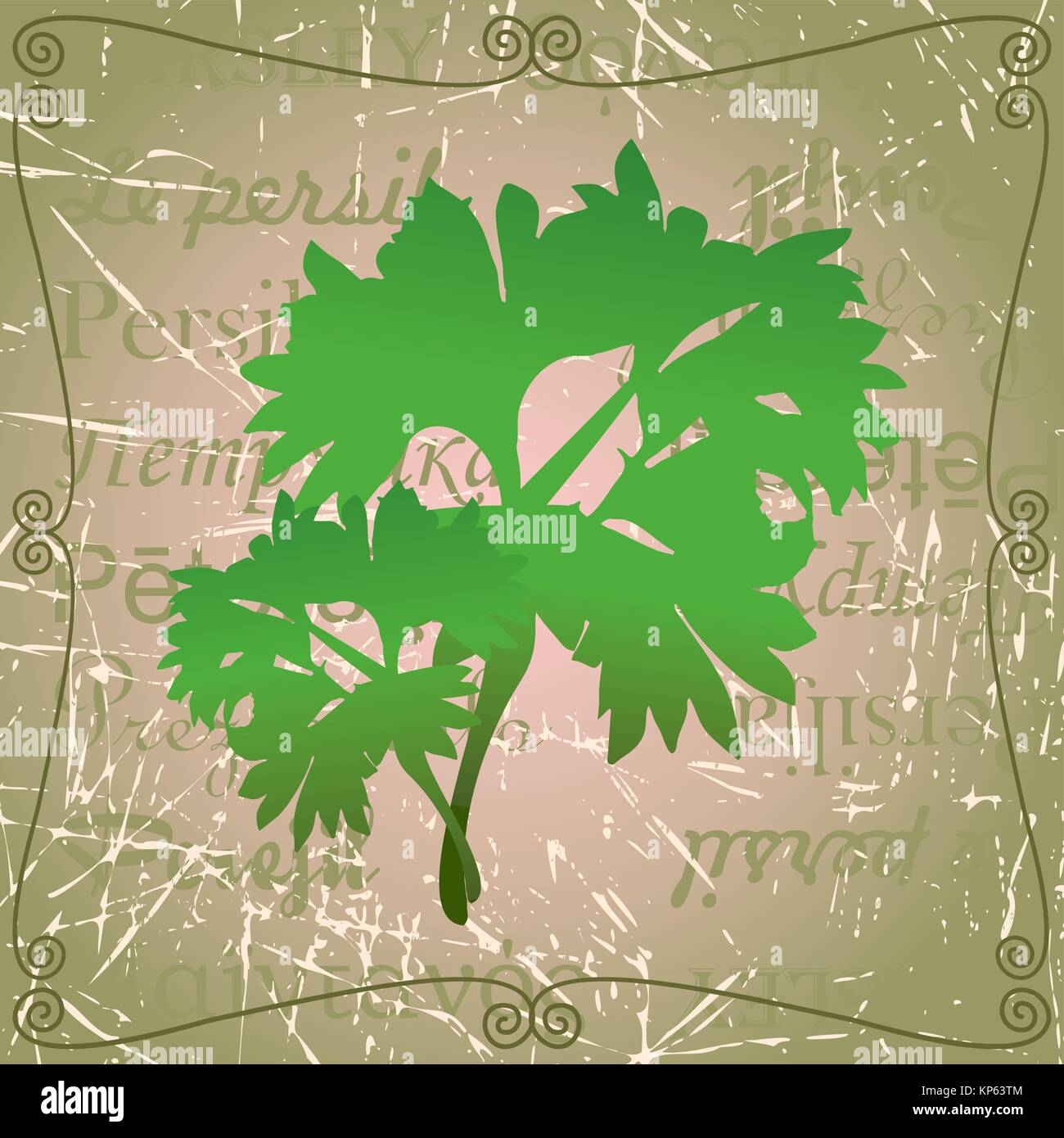 Sprig of parsley - Stock Vector