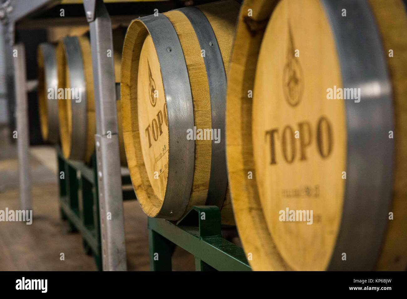 Whisky barrels stored in a distillery warehouse. They are lined up and full of alcohol. - Stock Image