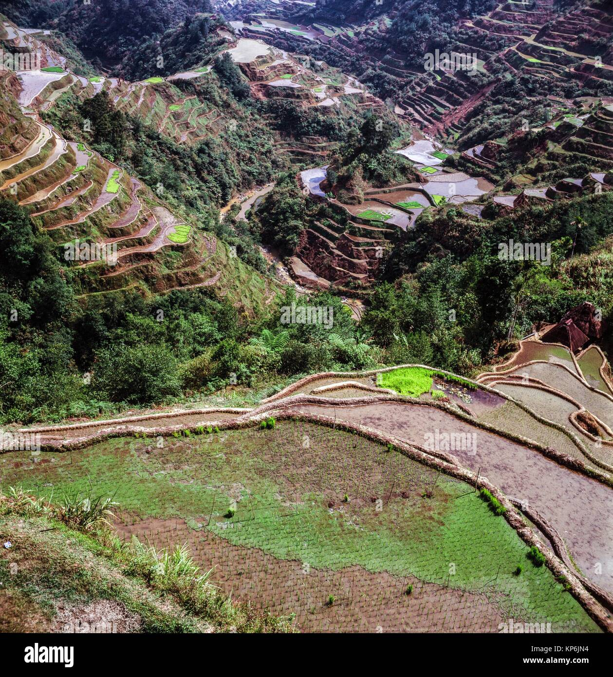 Banaue Rice Terraces, Ifugao Province, northern Luzon, Philippines. - Stock Image