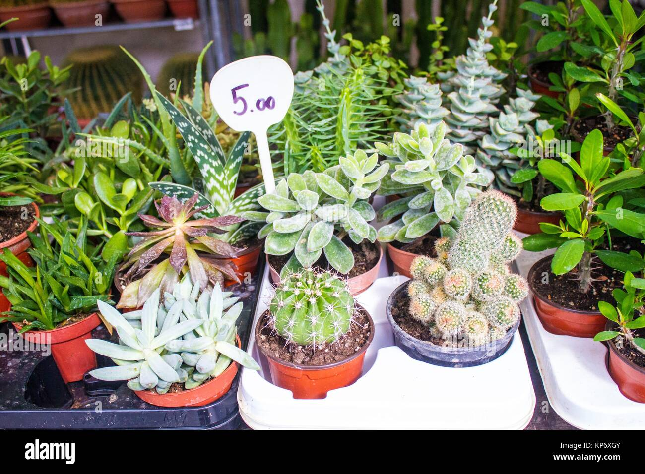 Outdoor Plants For Sale.Different Kinds Of Plants For Sale In An Outdoor Market In