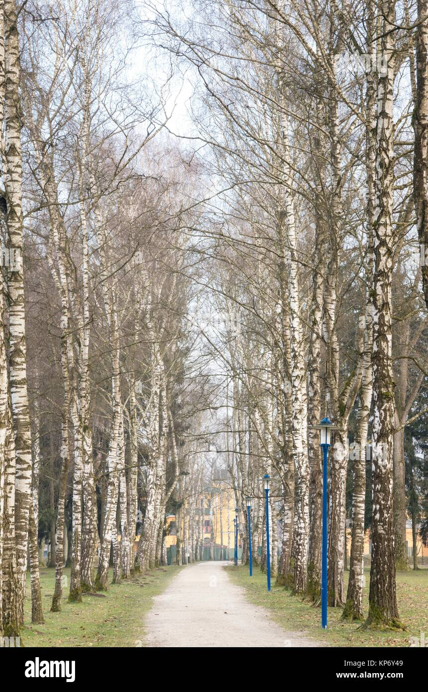 Birch Trees sourrounding a walkway in the Botanica Recreational Area in Bad Schallerbach, Austria - Stock Image