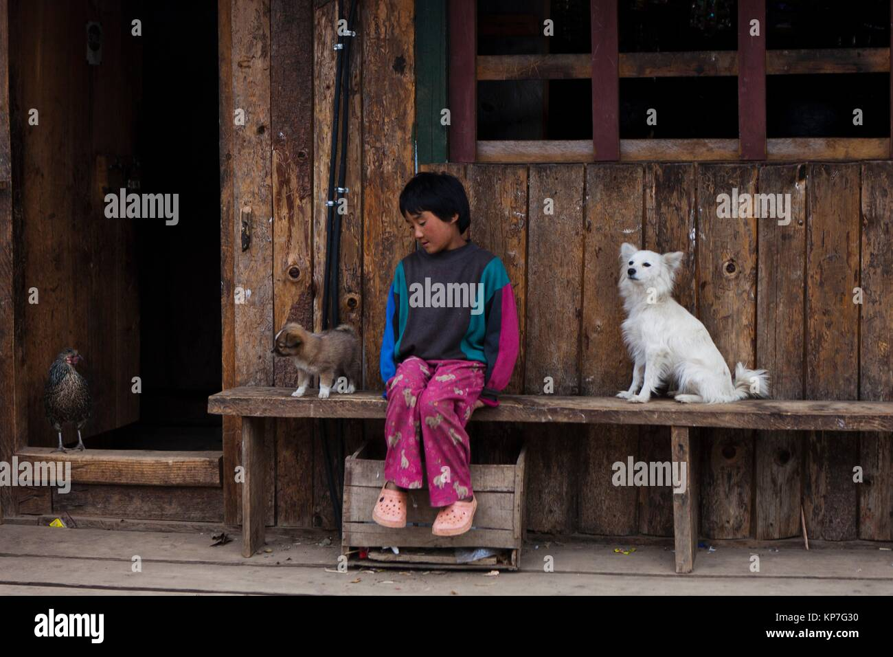 A Bhutanese girl at the entrance of her house with domestic animals, Gangtey, Bhutan, Asia - Stock Image