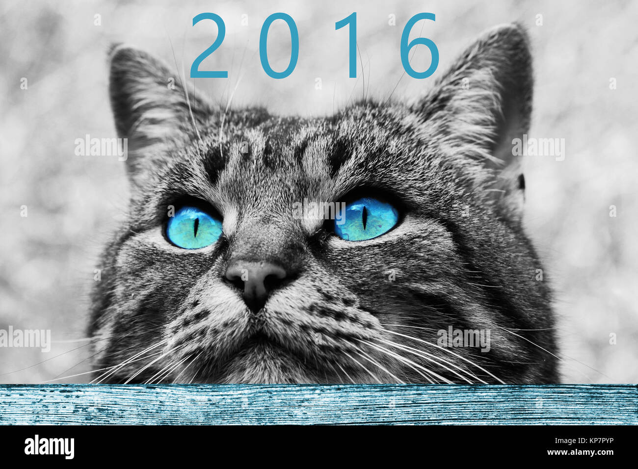 a curious cat look at the new year 2016 Stock Photo