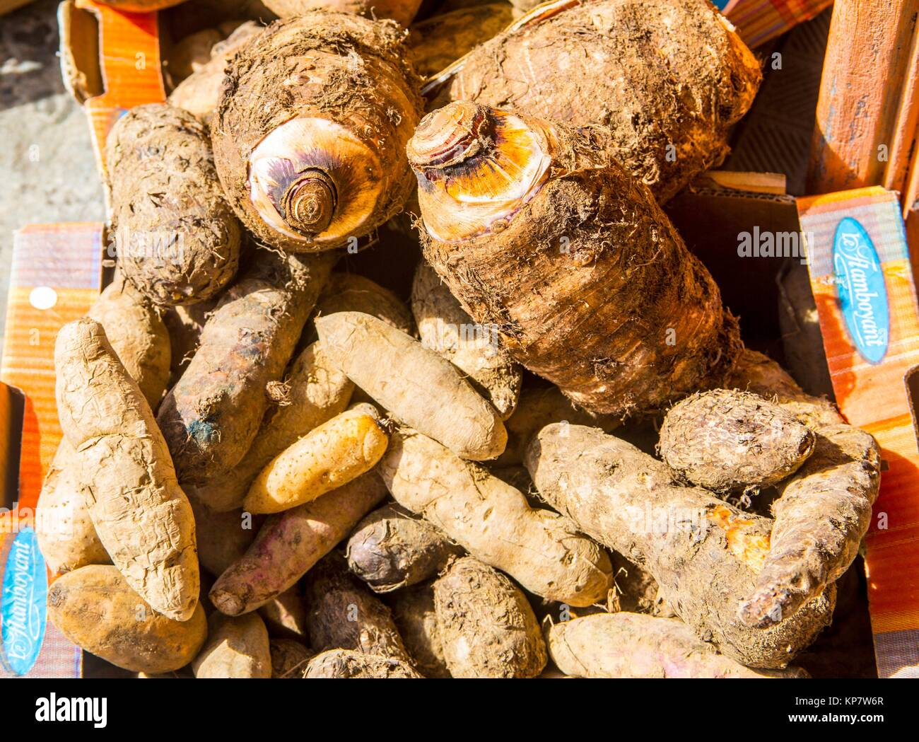 Local potato for sale in bulk in a local market in the tropical island of Martinique. - Stock Image