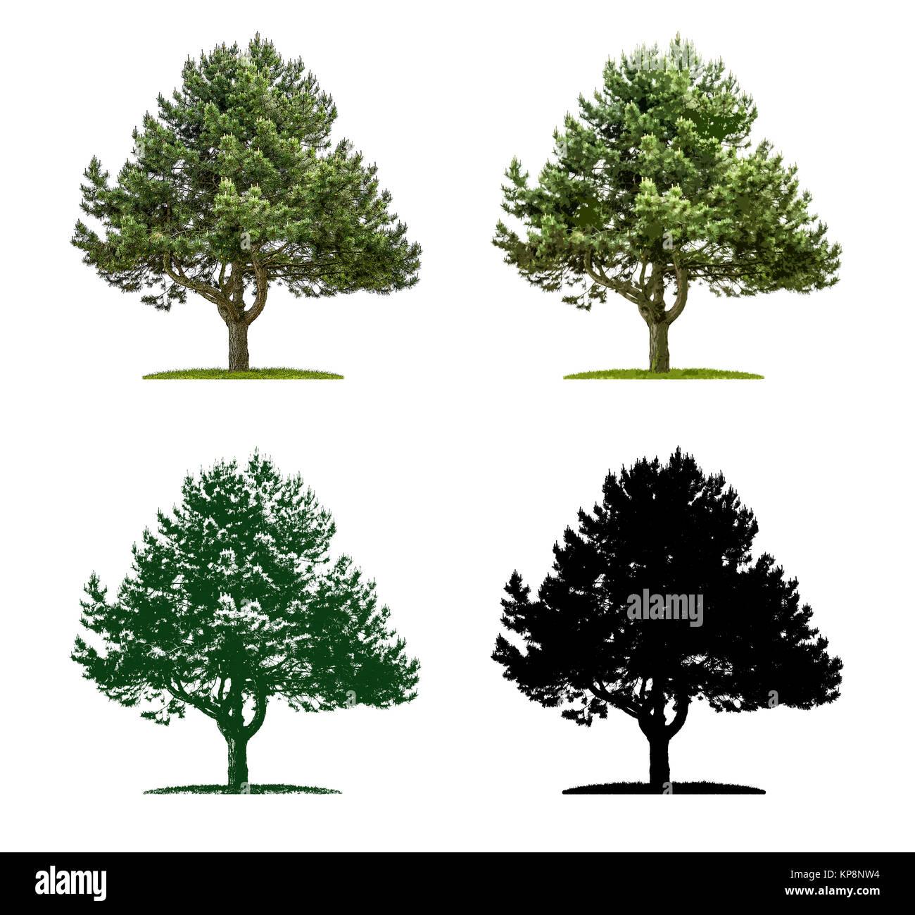 Baum in vier unterschiedlichen Illustrationstechniken - Kiefer Stock Photo