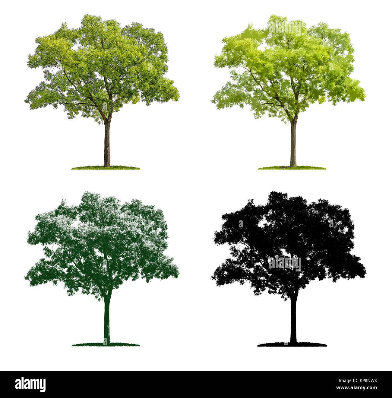 Baum in vier unterschiedlichen Illustrationstechniken - Schnurbaum Stock Photo