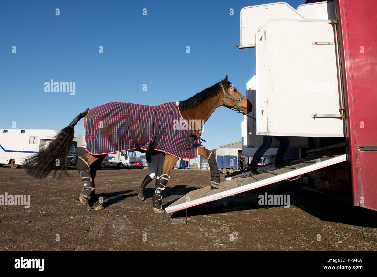 CUSTOM HORSE BOX STYLE 2 HORSE BOX TRAILER CAR BUMPER STICKER EQUESTRIAN PONY