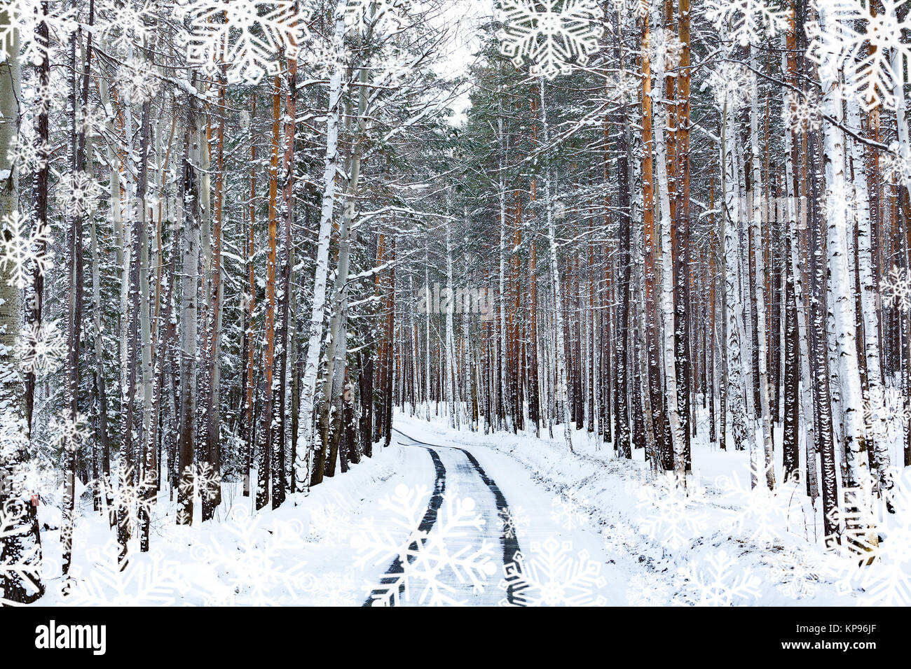 Road in winter forest. Snowcovered trees - Stock Image