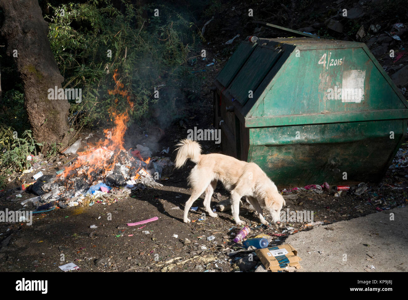 Street dog scavenges for rubbish around dumpster while fire burns plastics and other household garbage - Stock Image