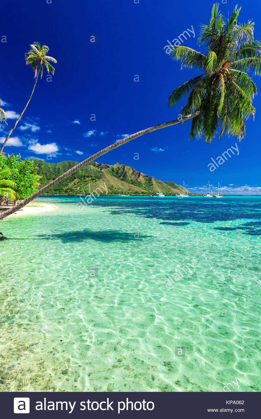 Public Beach On The North Side Of Moorea Island French