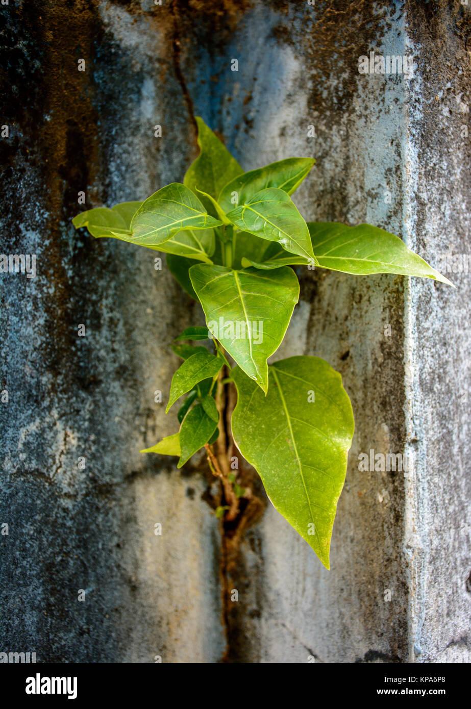 small banyan tree stock photos small banyan tree stock images alamy