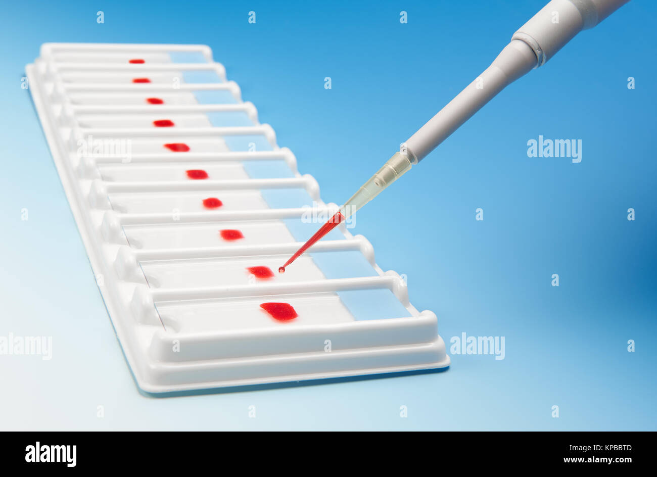 Biological assay concept. Array of blood samples for microscopy and a pipette on blue gradient background - Stock Image