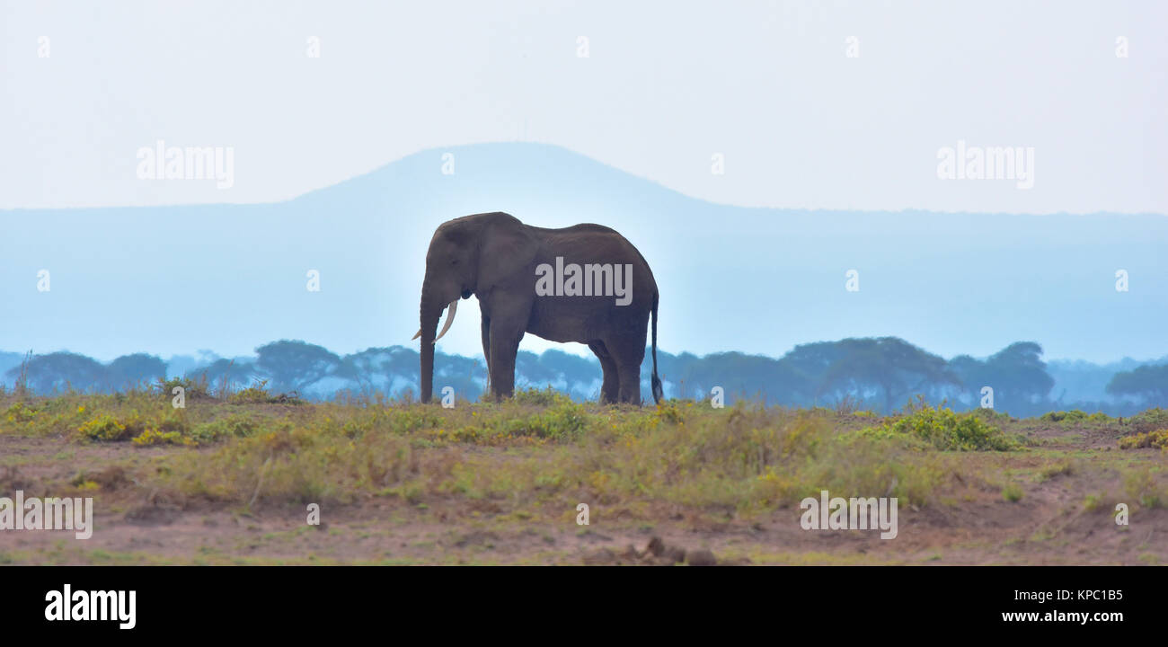 Kenya is a prime tourist destination in East Africa. Famous for wildlife and natural beauty. Elephant bull and blue - Stock Image