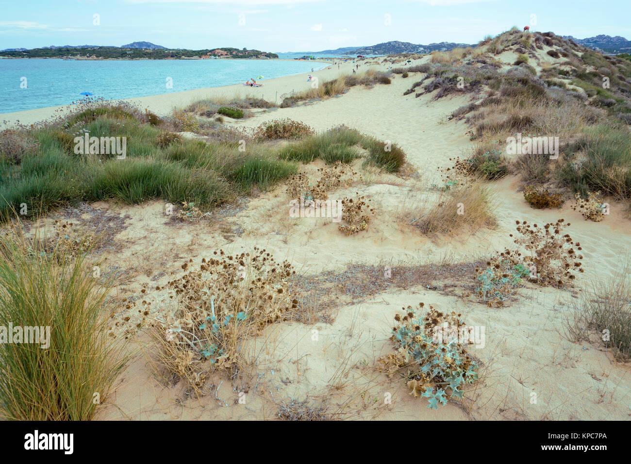 Sand dunes at the beach Spiaggia del Liscia, Porto Pollo, Sardinia, Italy, Mediterranean  sea, Europe - Stock Image